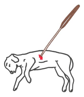 Dog rock 1