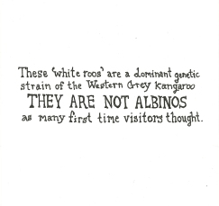 they are not albinos